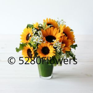 Local Sunflowers and Chamomile