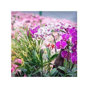 Orchid Delivery Denver