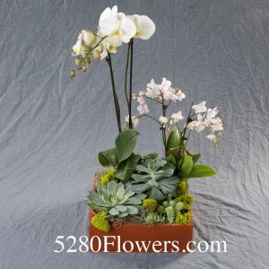 Orchid planter with succulents