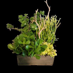 Succulent Planter Denver Colorado Delivery